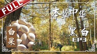 "【FULL】《本草中华2》第3集 两极色彩见证生命的不同侧面 白酒和墨也是一味中药?""Herbal China""-S2 EP3【东方卫视官方高清HD】"