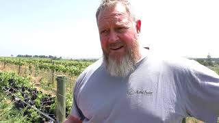 Longridge South Africa - Biodynamic Wines