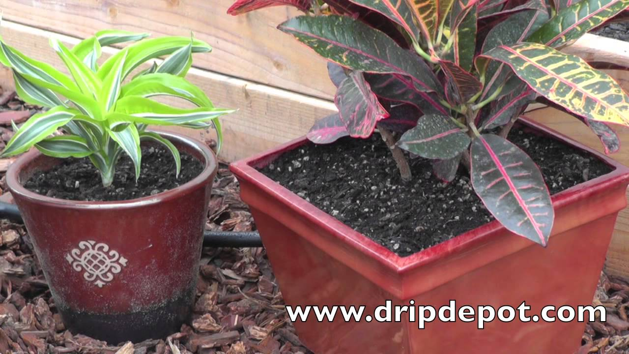 How To Setup A Drip System For Container Gardening Youtube