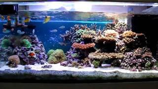 ミドリイシが中心な水槽 魚もぼちぼち ミドリイシは調子がよく成長中☆ ...
