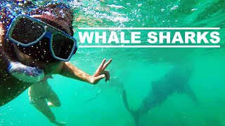 WHALE SHARK Swimming in Oslob, Philippines! - 4K