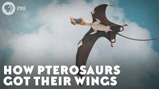 How Pterosaurs Got Their Wings