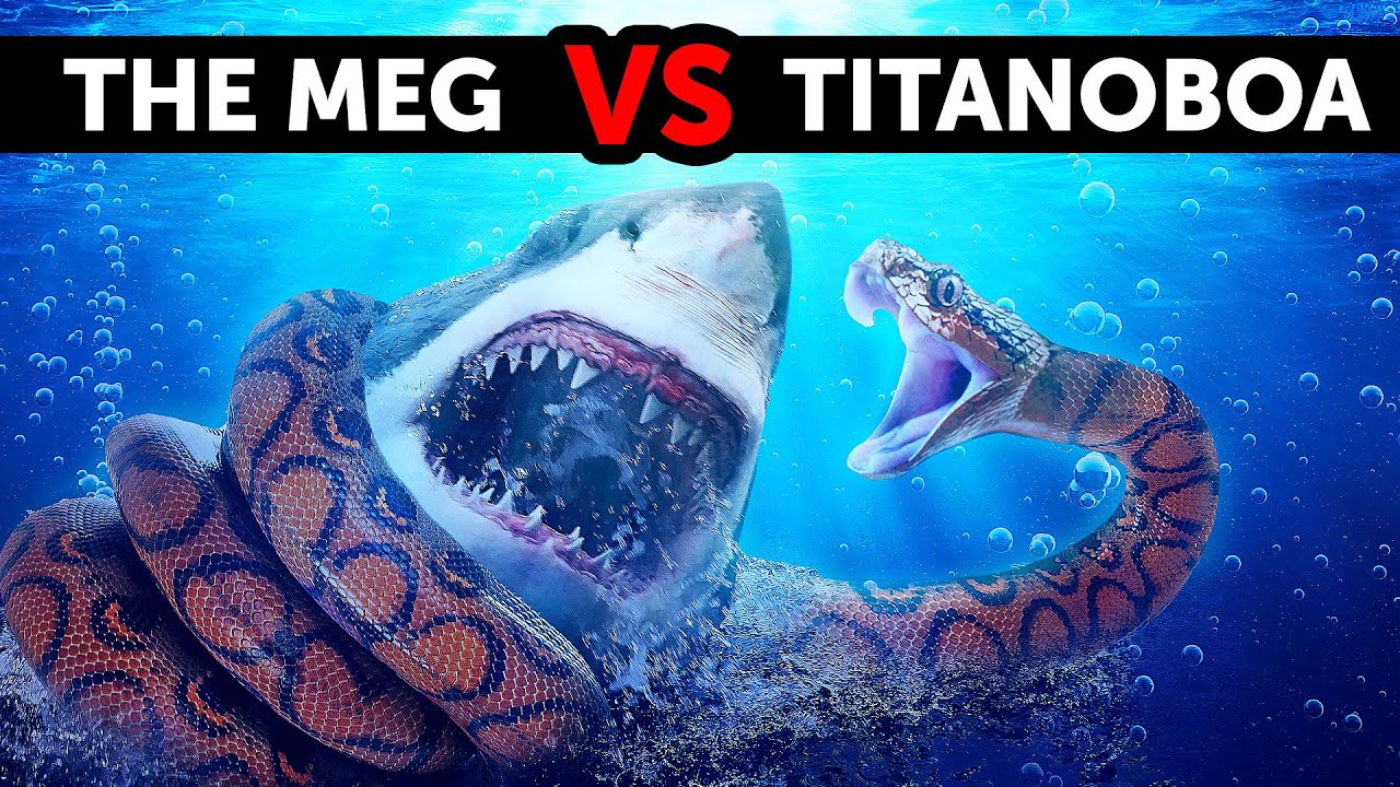 Download What If Megalodon Met the Biggest Snake Ever