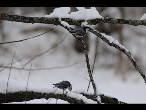 2013 Winter Around Clinton County, Indiana