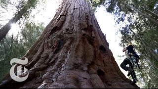 Climbing Sequoia Trees for Climate Change