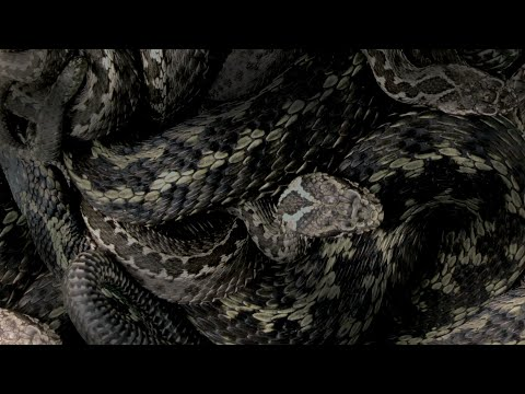 Moanhand - Serpent Soul (A Tale of Angels' Slaughter) (Official Visualizer Video) 2021