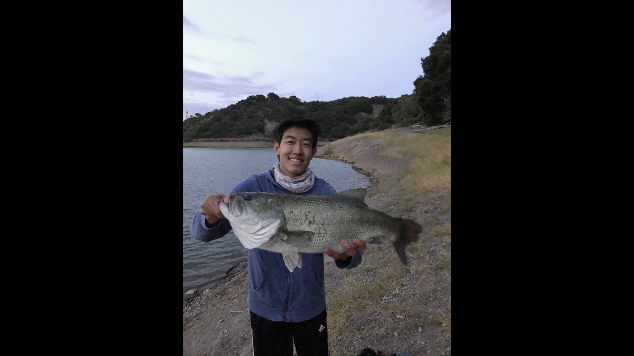 MASSIVE 7 LB BASS!!! CAST TO CATCH! Stevens Creek Reservoir Bass Fishing!