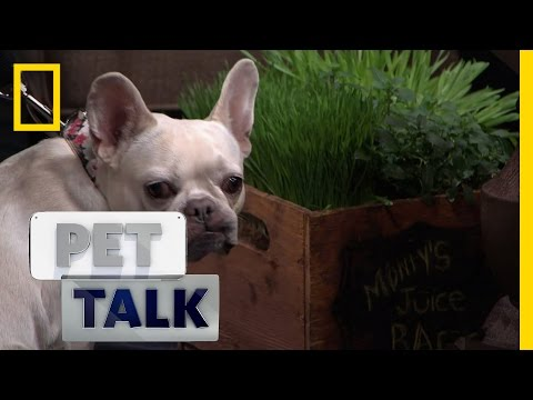 Why Do Dogs Eat Grass? | Pet Talk