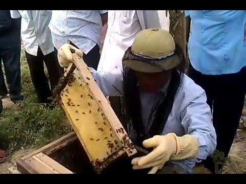 Cách chia đàn ong mật