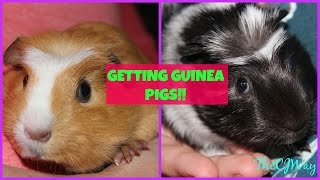 GETTING MY NEW GUINEA PIGS?!! VLOG