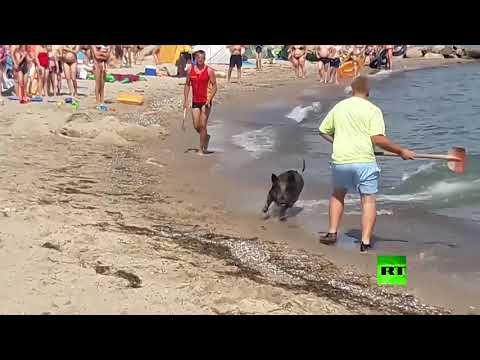 فيديو.. خنزير بري يزرع الخوف في صفوف مصطافين في شاطئ ألماني  - نشر قبل 43 دقيقة