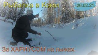 По снежной целине за Хариусом Рыбалка в КОМИ