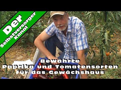 Bewaehrte Paprika und Tomatensorten fuer das Gewaechshaus