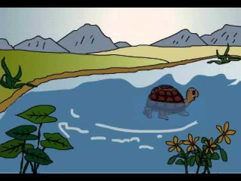 Câu chuyện mầm non: Rùa con tìm nhà