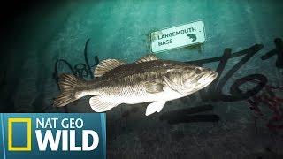 Polowanie na legendy Teksasu - Ryby w wielkim mieście