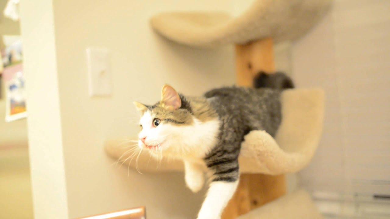 Bing The Cat