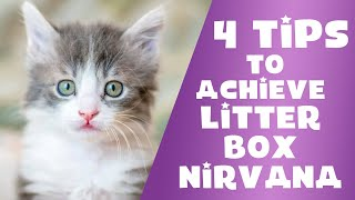 Tips to Help with Litter Box Problems with Jackson Galaxy