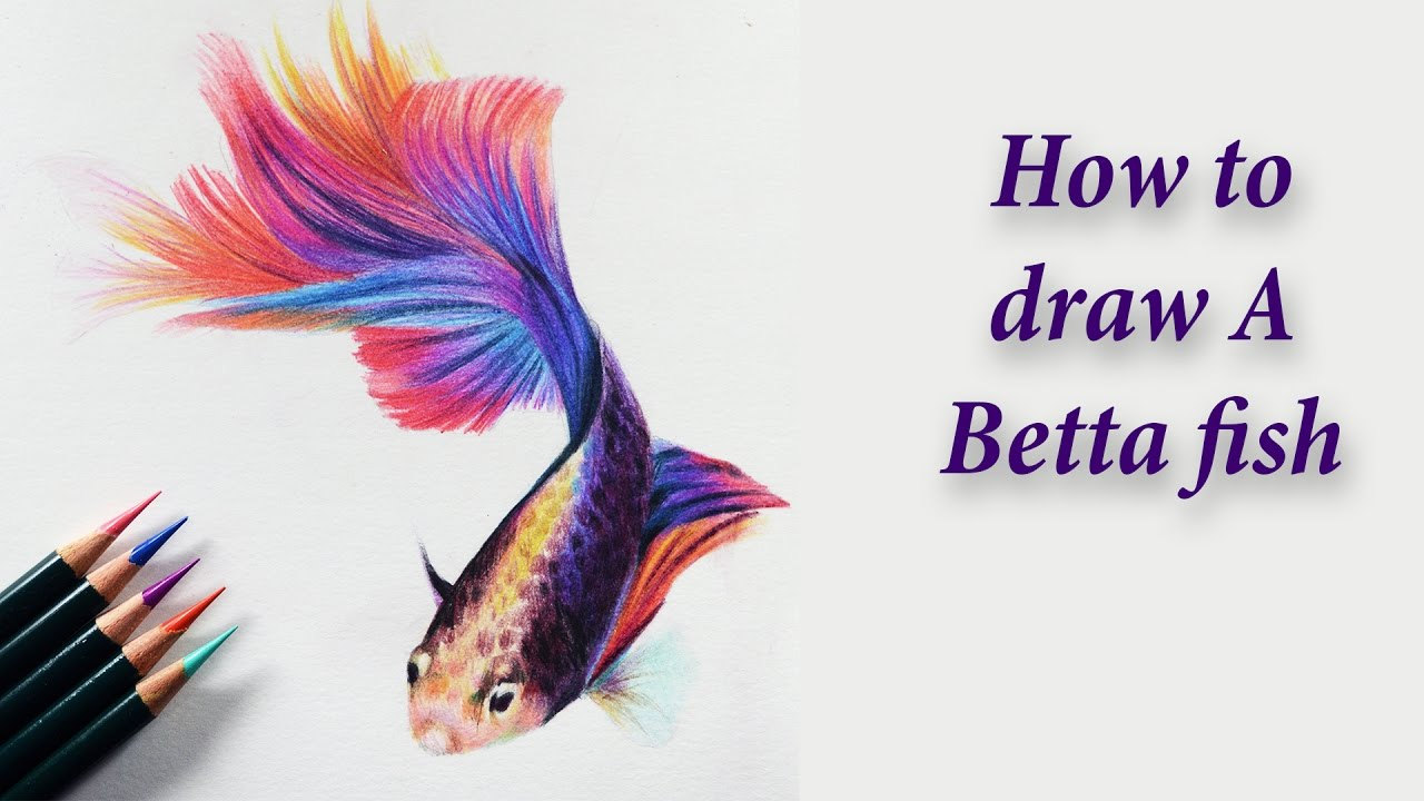 How To Draw A Betta Fish Colored Pencil Tutorial Youtube