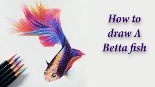 How to draw A Betta fish - Colored pencil tutorial.