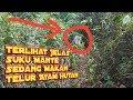 Kaget Penampakan Suku Mante Sedang Makan Telur Ayam Hutan  Mp3 - Mp4 Download