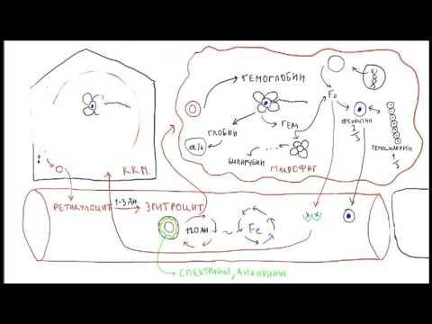 Гемоглобин у детей -