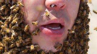 I Survived 24 Hours Straight Locked In A Killer Bee Hive