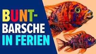 Buntbarsche in Ferien | NORBERT Zajac | Zoo Zajac, Duisburg
