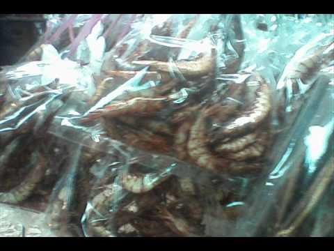 Persembahan syarikat salt fish enterprise youtube for Salt fish head