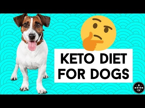 ketogenic-diet-for-dogs-//-dog-cancer,-diabetes-&-obesity-discussed