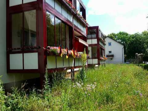 Siedlung Alt-Wittenau im Juni 2012