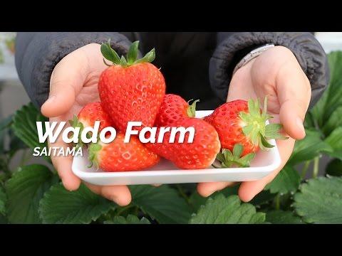 Wado Farm, Saitama   One Minute Japan Travel Guide