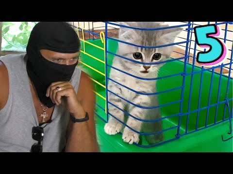 Побег из клетки. Куда ушел Кот Макс и будет ли спасение котенка?