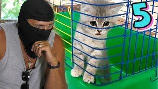 Спасение котенка - побег из клетки. Куда ушел Кот Макс?
