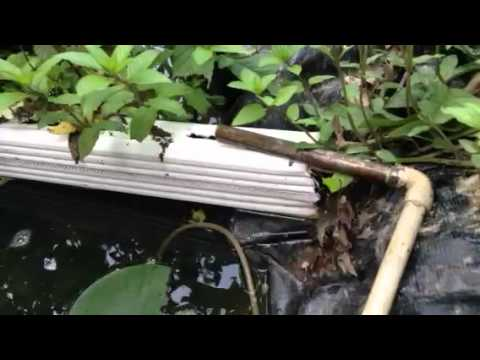 Fish pond filter airlift pump cheap and reliable youtube for Airlift koi pond