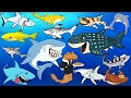 Learning Sea Animals SHARK Names with Cartoon & Real Water and Sea Animals for Children.