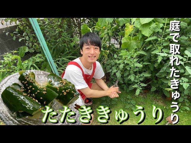 庭で育てたきゅうり