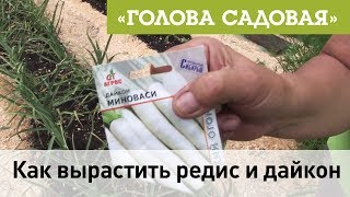 Голова садовая - Как вырастить редис и дайкон