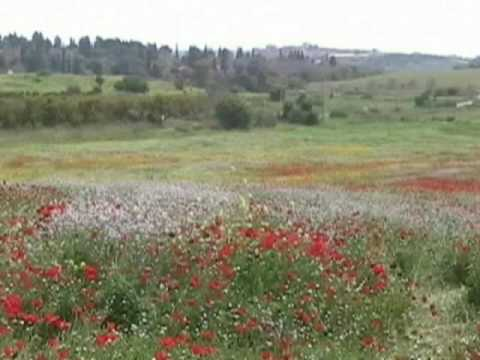 Natural Sights And Sounds Of Israel # 3