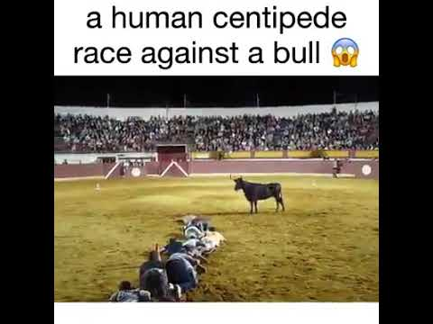Toro funniest games