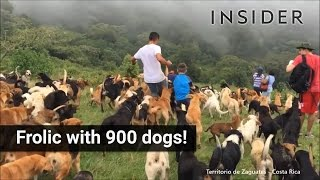 Frolic With 900 Dogs In Costa Rica