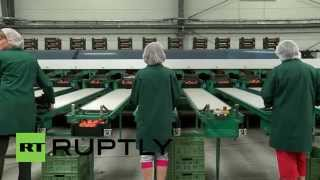Poland: Tomato farms feel the rot as Russia