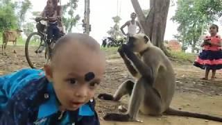 Cute little child make a friendship with wild animals Langoors