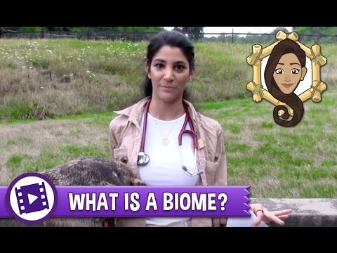 Biomes Savanna | Biology | Ecology from YouTube · Duration:  2 minutes 37 seconds