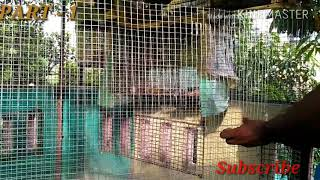 My New birds colony part -1 hindi