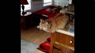 Вертуальный тренажер  Смешное видео про животных кошек до слёз смотреть бесплатно 720p