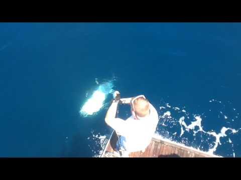 big game fishing tuna Barcelona