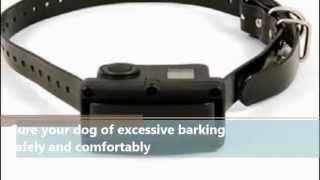 Pet Products Online   Sportdog Rechargeable 10r Bark Control Collar   Petproductsonline.info