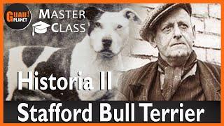 Staffordshire bull terrier historia parte 2