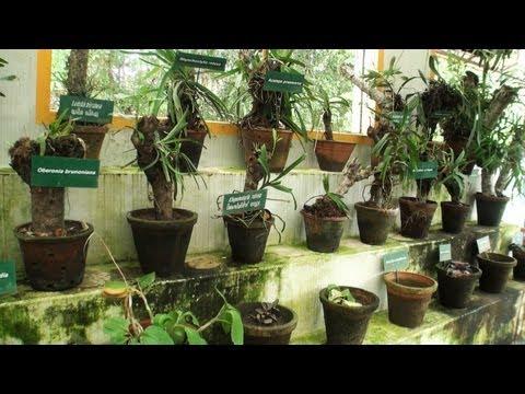 Medicinal Plants Garden, Nilambur