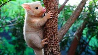 Cute Animals You Did Not Know Existed